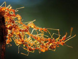 social-worker-ants-macro_86239_990x742